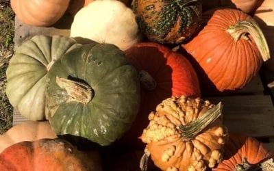 Envirobinz Sponsors Cooper Trooper Pumpkin Patch