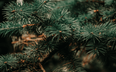 How to Recycle Your Christmas Tree (Williamson County)