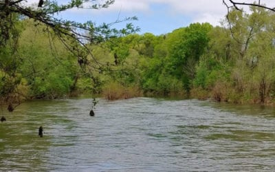 Doing Your Part to Protect the Harpeth River