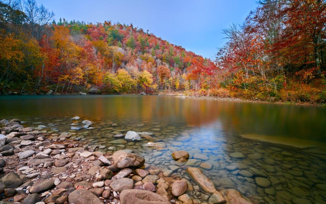 Celebrate International Biodiversity Day in Tennessee