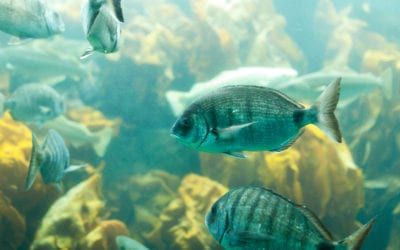 Celebrate World Fish Migration Day with Free-Flowing Rivers All Year Long